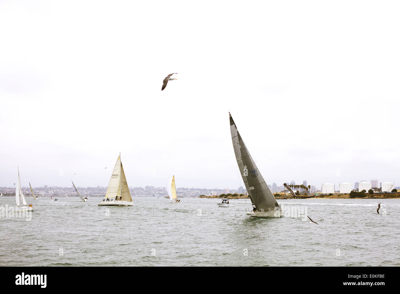 Sail boats on the Pacific Ocean off the coast of California. - Stock Image