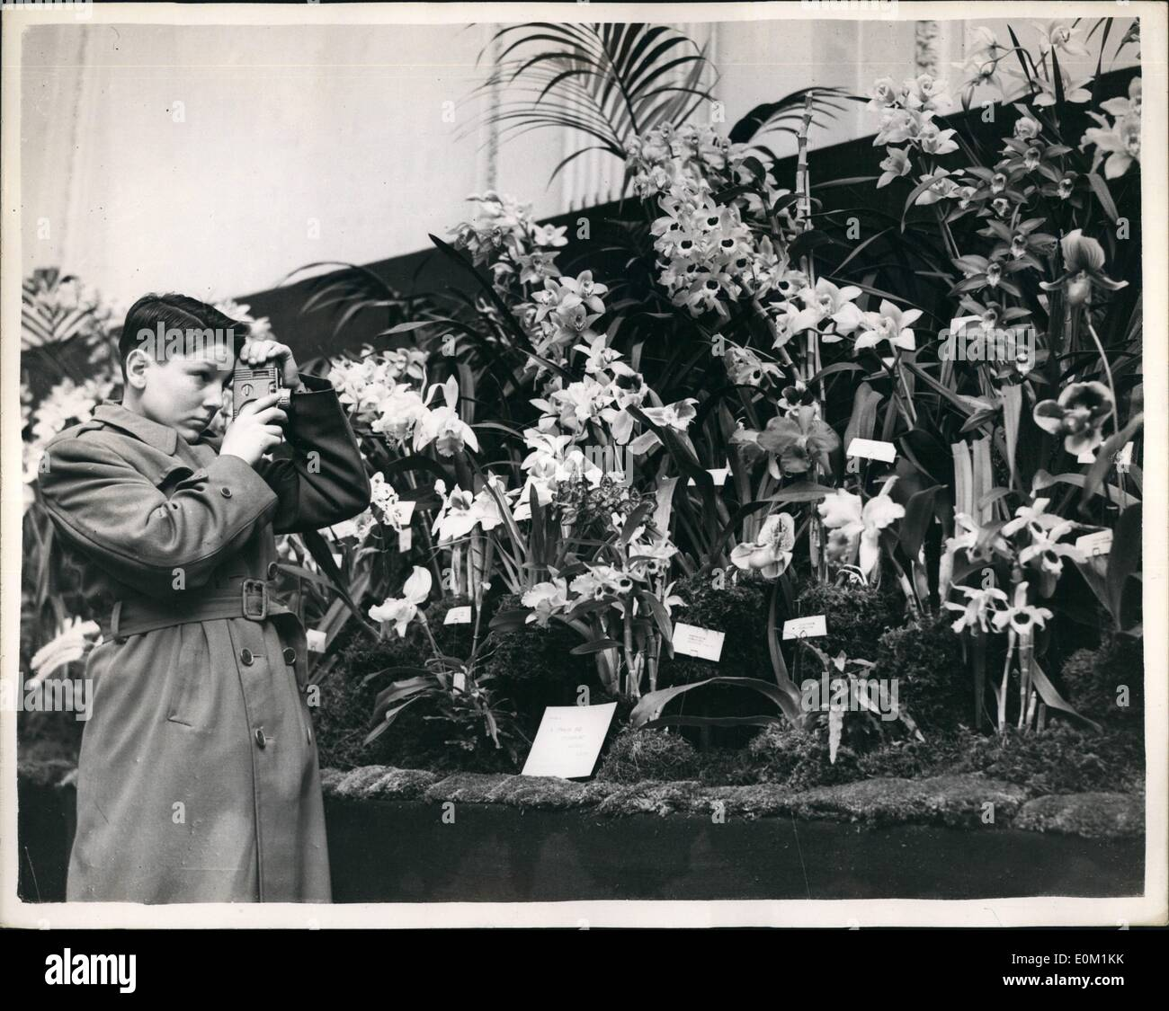 Mar. 03, 1953 - British Orchid Growers Association show in London. Youngster from America to see the display: Many wonderful blooms were to be seen at the British Orchid Growers Association show which opened at the Royal Horticultural Hall, Westminster, this morning. Photo shows Young George William Butter worth who comes from Framingham, Ms., U.S.A.. takes a cine film of some of the exhibits at the show today. He came to London with his father. especially to see this display. He himself enters in every possible orchid show in the United States. and has had many successes. - Stock Image