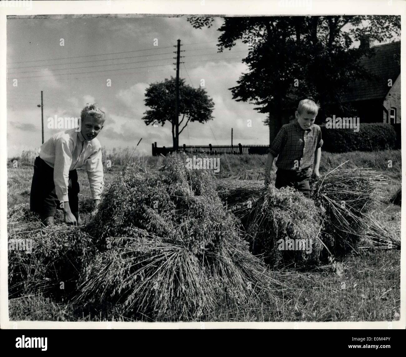 Aug. 07, 1953 - Danish Princes give a hand with the harvest: Prince Inglof and Prince Christian the two sons of Prince Knud brother of King Frederick IX of Denmark are on holiday on the farm of Mr. Sode, which adjoins the Royal Estate of Freiensborg Castle, North Sealand. During the holiday they are putting themselves to go use by helping with the harvest. Photo shows Prince Ingolf (left) and Prince Christian helping with the harvest. - Stock Image