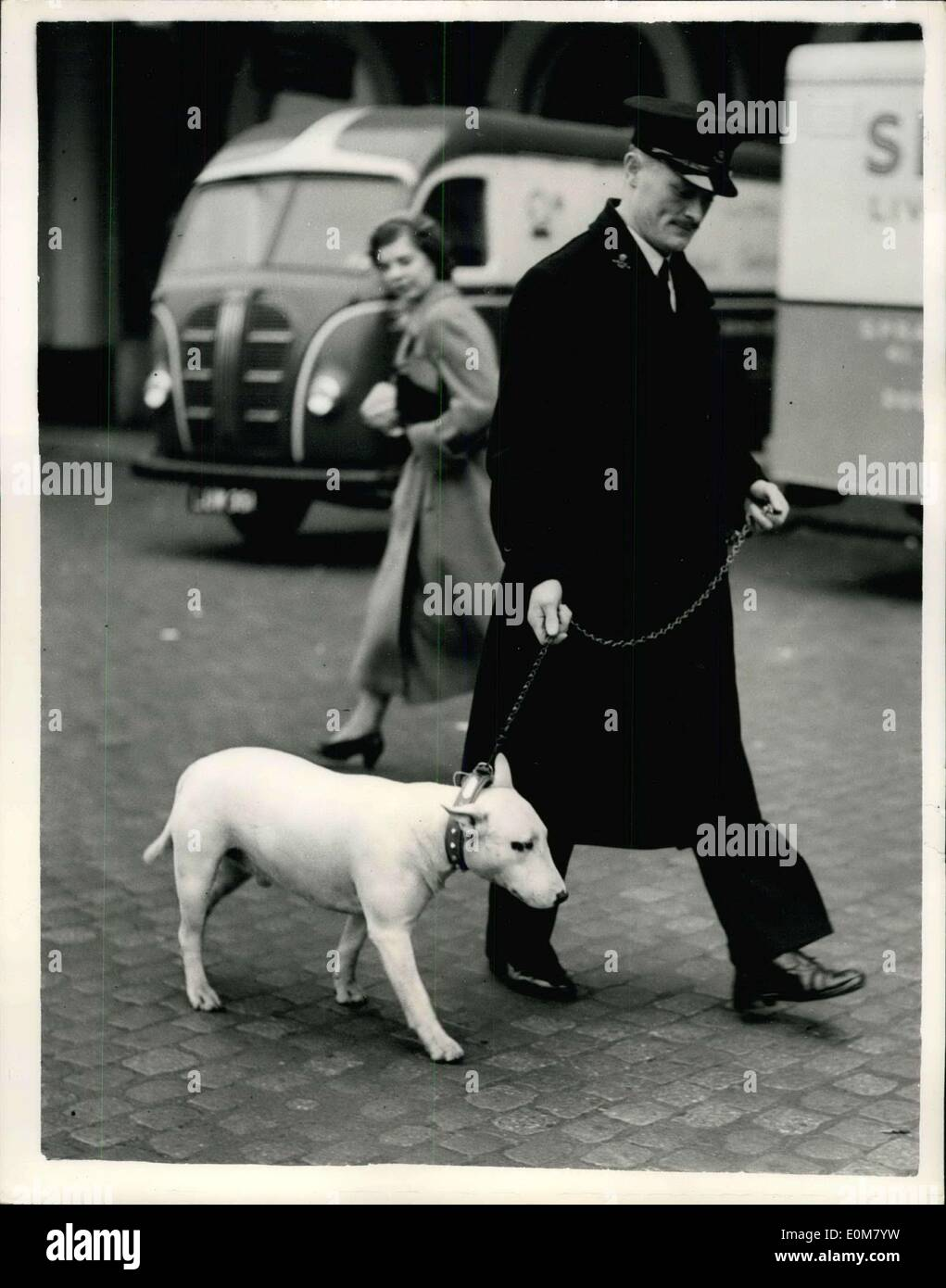 Nov. 24, 1953 - Dog Goes by Air to the Lebanon, Flies to his R.A.F. Master. ?Rolfe? a Bull Terrier, was to be seen in London this morning prior to leaving London Airport for the Lebanon. The flight has been arranged by the R.S.P.C.A. and the dog is going out to his master Flight Sgt. F. Hitchcock serving with the RAF at Base Aerienne, Rayak, Lebanon. Rolfe is 2 year old and was being cared for by Mrs. Hitchcock of Hythe, who asked the RSPCA to find a home for him otherwise o have him destroyed - Stock Image