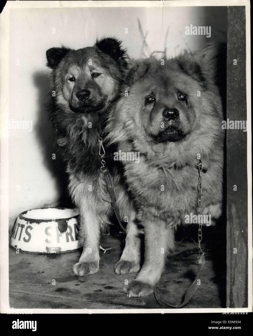 Feb  12, 1954 - R S P C A  Take Care Of Murdered Women's Pet