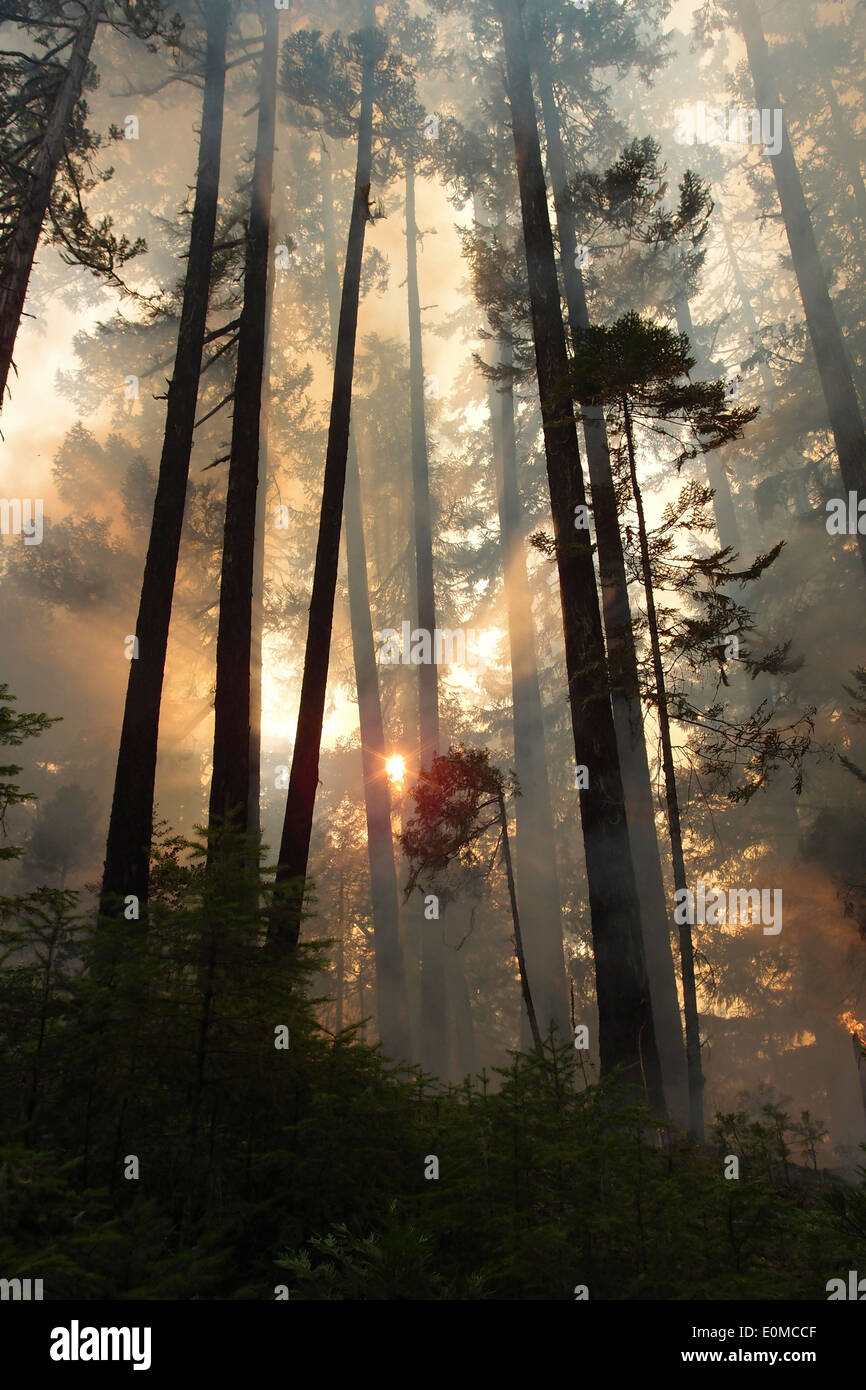 The sun shines through smoke on a wildfire on the Umpqua National Forest, Oregon, USA - Stock Image