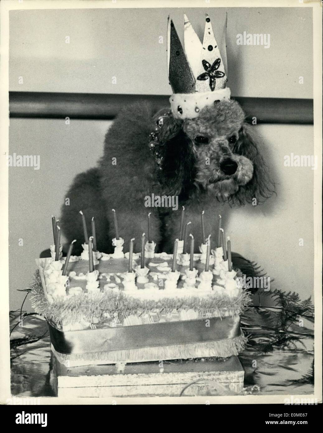 Jan. 01, 1955 - Society Girl's Dog celebrates his 21st. Birthday He is only three really!!!!.: Thirty poodles attended the 'party' given by society girl Cynthia Springman in London yesterday in honour of the 21st. birthday of her poodle ''Maeimillian Tarrywood Silver Sprig-Emperer'' (The age reckoning being at the rate of seven dog years to one human - he is really only three).. The dogs ate chicken, rabbit; olives salami and Gruyere cheese - and their milk was served from a champagne magnum - Stock Image