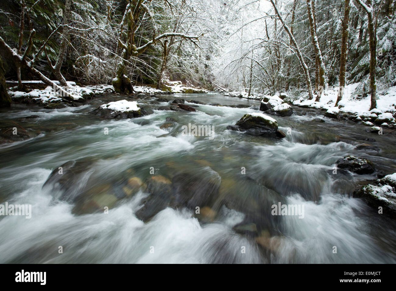 The icy waters of the Row River rush past snow-covered evergreen forests, Oregon, USA - Stock Image