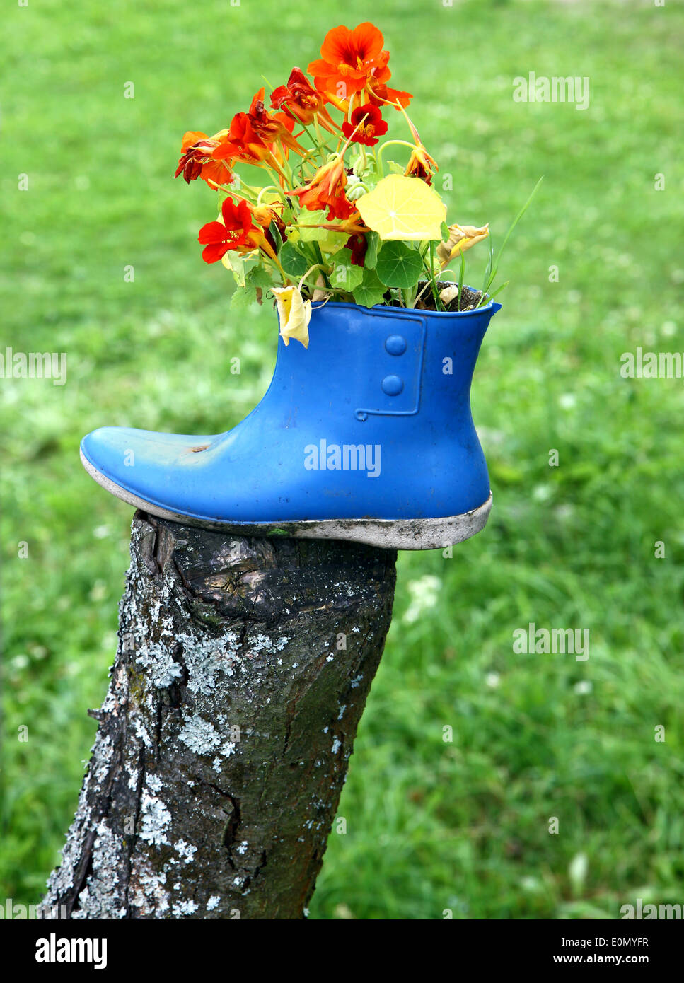 Funny flower decoration set in old rubber boot Stock Photo