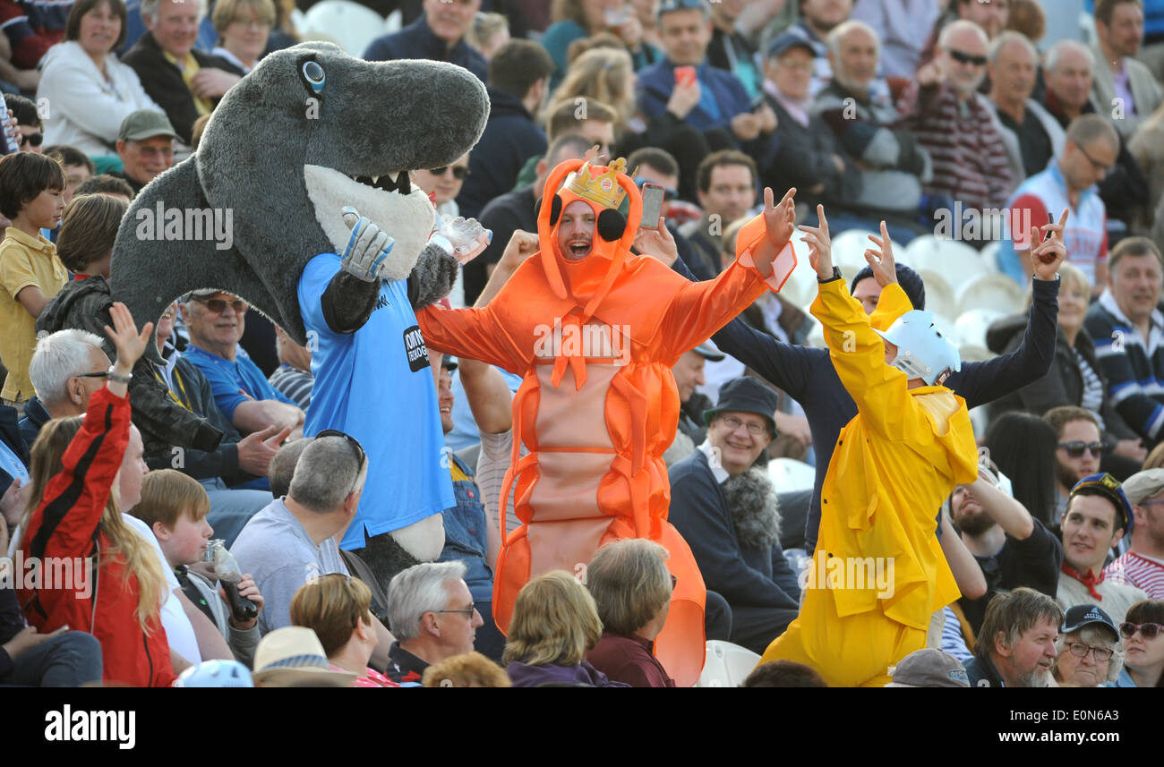 Sussex Sharks v Surrey T20 Blast cricket match at Hove A large prawn meets Sid the Shark the Sussex mascot - Stock Image