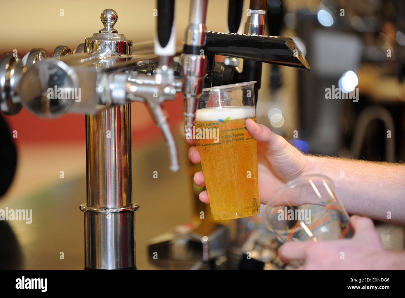 A girl pulls a pint of beer / lager in a pub. - Stock Image