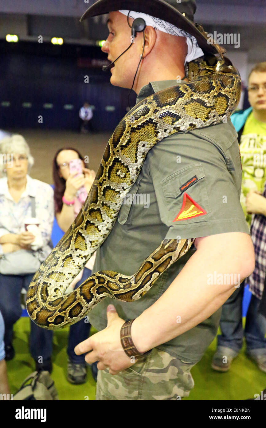London, UK. 17th May 2014. A Burmese Python decides to hide inside the shirt of Crocodile Joe at the London Pet - Stock Image