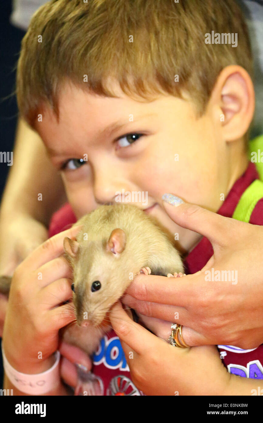 London, UK. 17th May 2014. Josh plays with a rat from the Fancy Rat Society at the London Pet Show, Earls Court, London. Credit:  Paul Brown/Alamy Live News - Stock Image