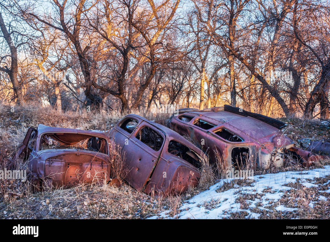 rusty junk cars abandoned in woods - environmental pollution concept ...