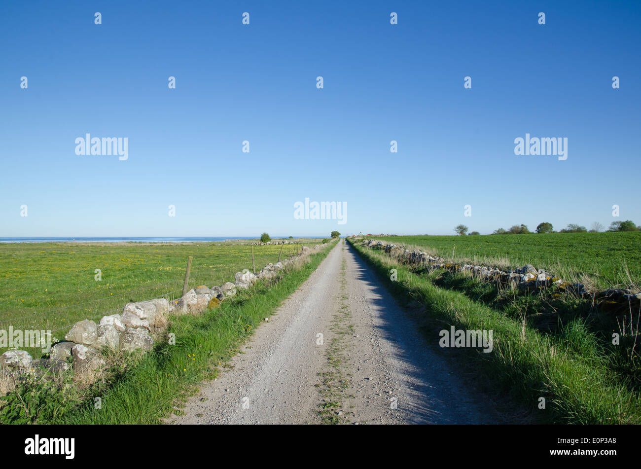 Country road with stonewalls straight to the coast at spring - Stock Image