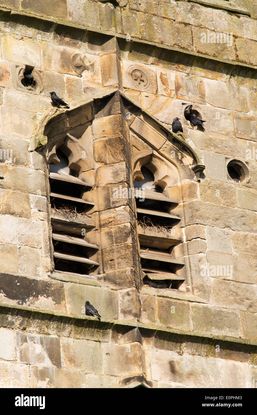 Crows nesting in the tower of St Peter and St Paul's church Bolton-by-Bowland, Lancashire, England, UK - Stock Image