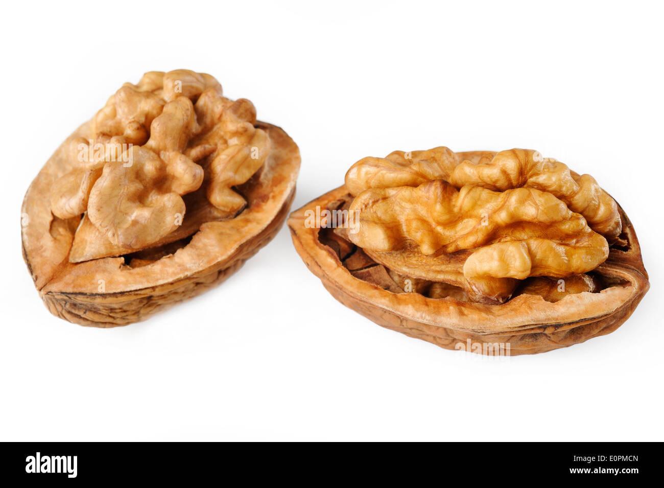 walnut on white background - Stock Image