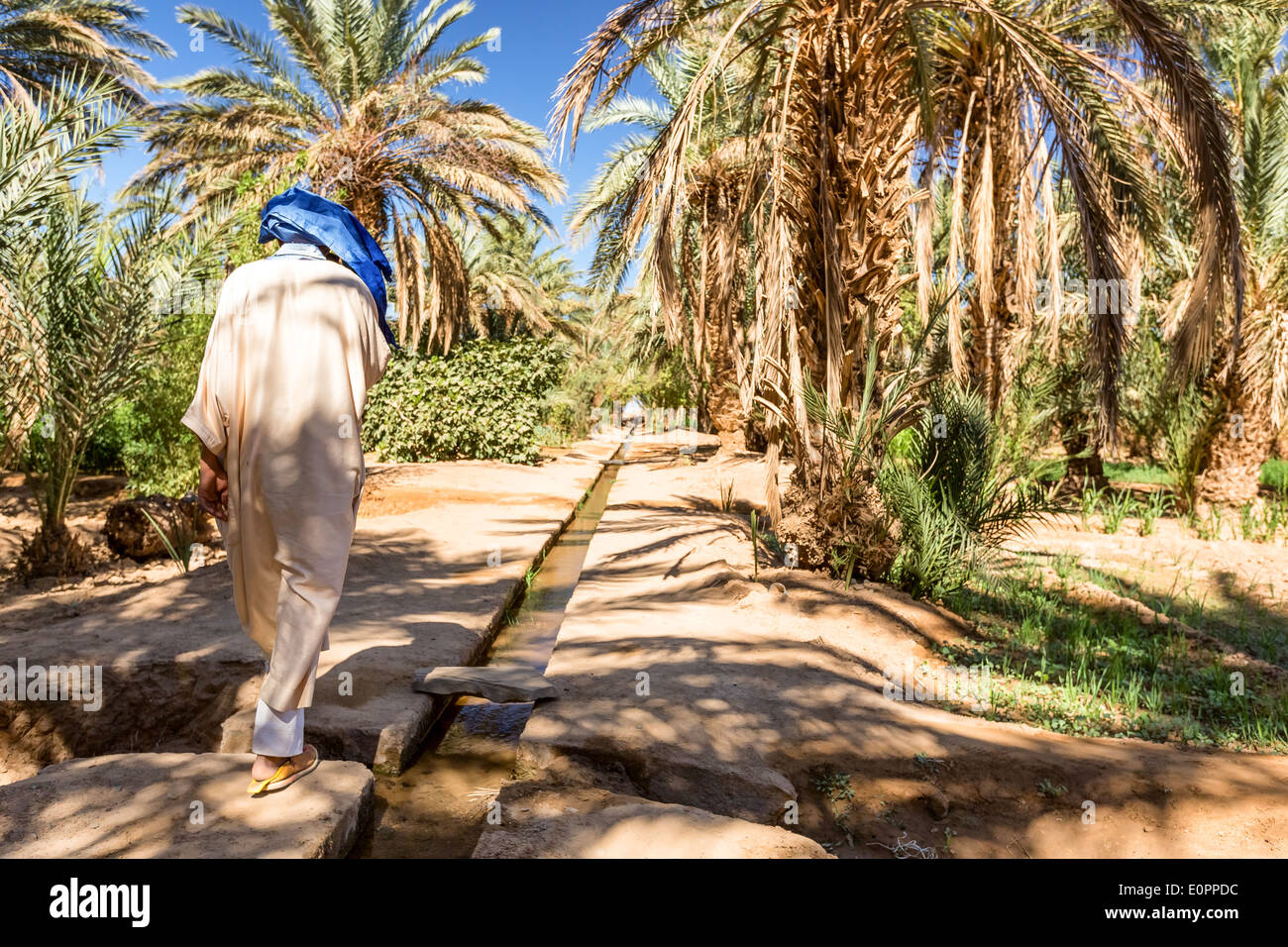 At Merzouga oasis, Merzouga, Morocco, Africa - Stock Image