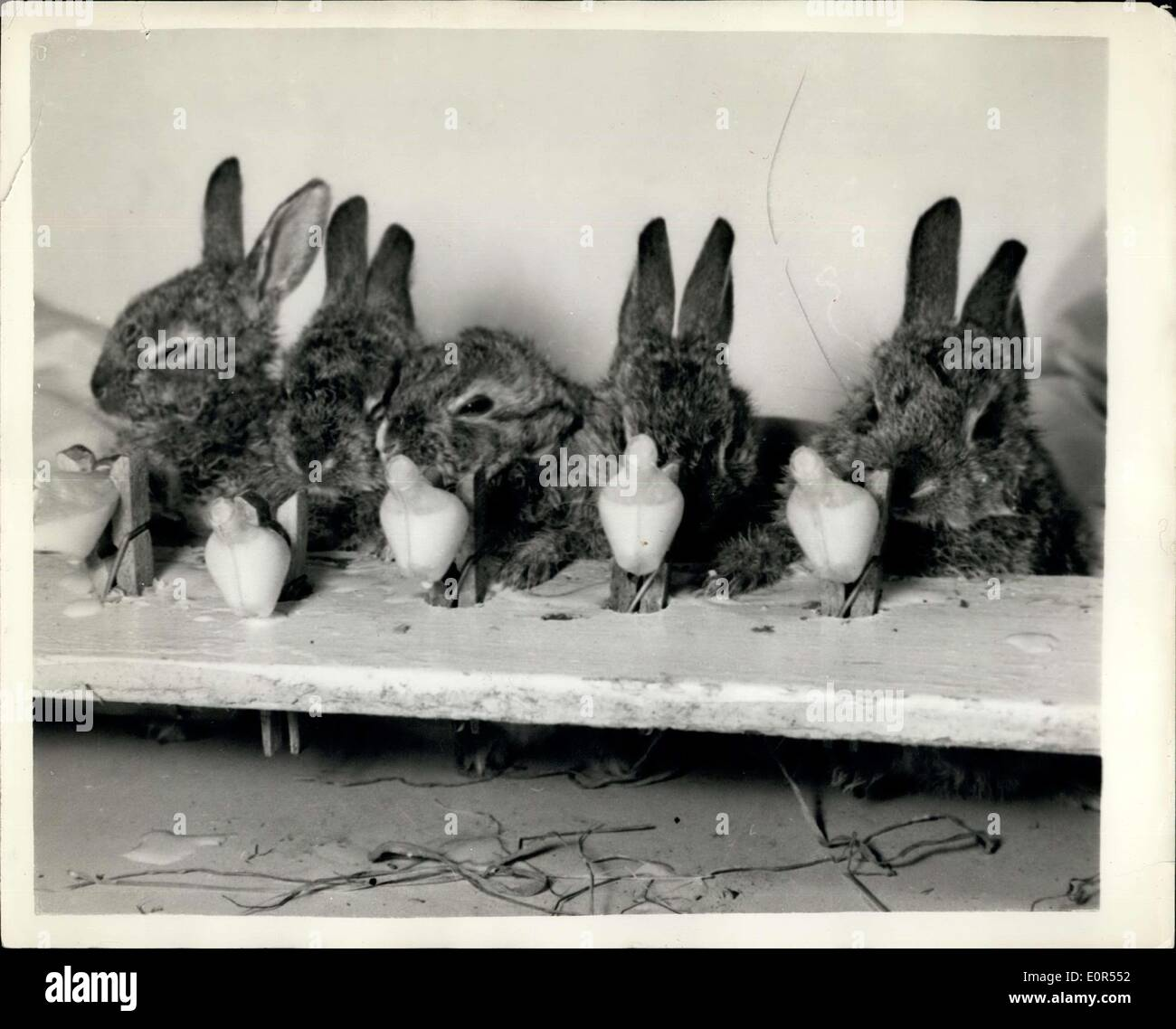 J Bunny Stock Photos & J Bunny Stock Images