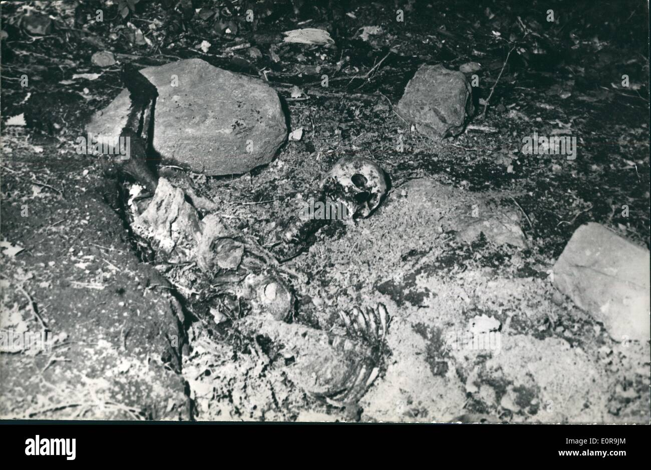 sep 09 1958 400 mutilated bodies of slain muslims found in stock
