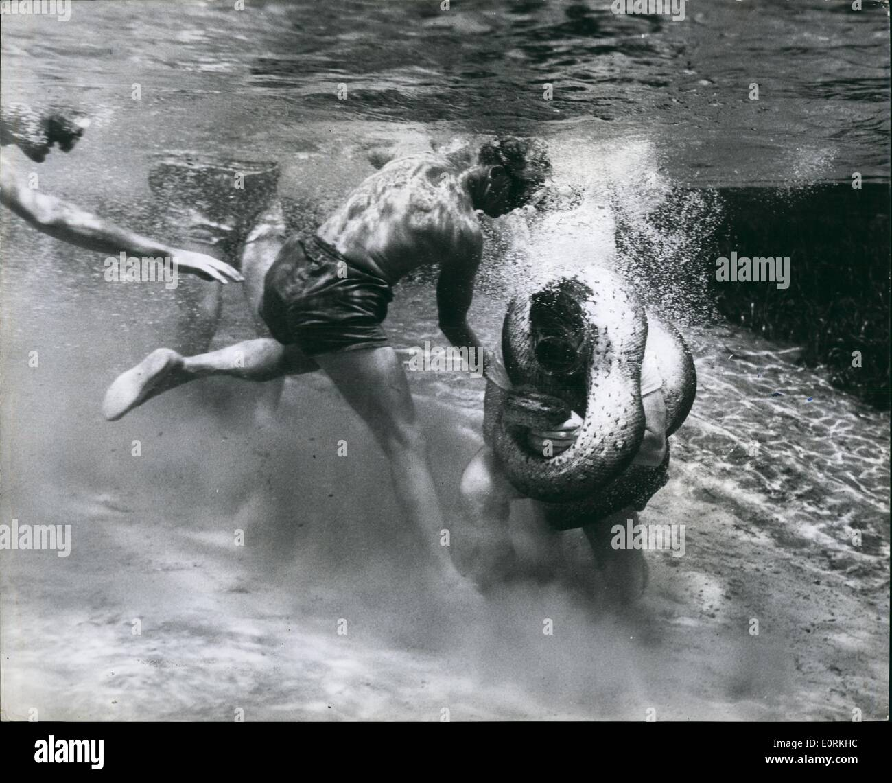 Jan 1, 1960 - Man versus Anaconda - underwater. Most fantastic battle of a lifetime: Horror registered grimly on the face of a small group of spectators as Ross Allen as 50 year old American Naturalist proceeded on the maddest stunt of his life. wrestling with a killer Anaconda underwater. Never before the history of mankind has such a fantastic challenge taken place - Stock Image