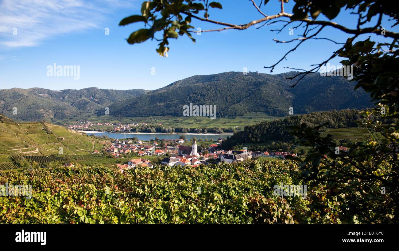 Weinberge in Spitz/Donau, Österreich, Niederösterreich, Wachau - Vineyards in Spitz/Donau, Austria, Lower Austria, Wachau Stock Photo
