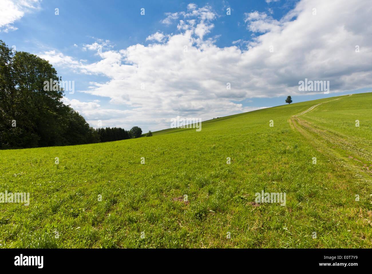 Wiesenweg - Rual way Stock Photo