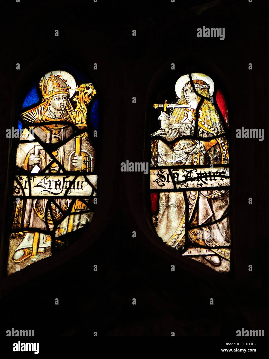 Medieval stained glass, St. Erasmus, Bishop of Formia, St. Agnes with dagger at her throat, holding a lamb, Sandringham Parish - Stock Image