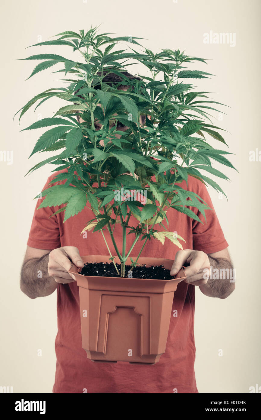 Portrait of a man holding flowerpot with Cannabis plant. - Stock Image