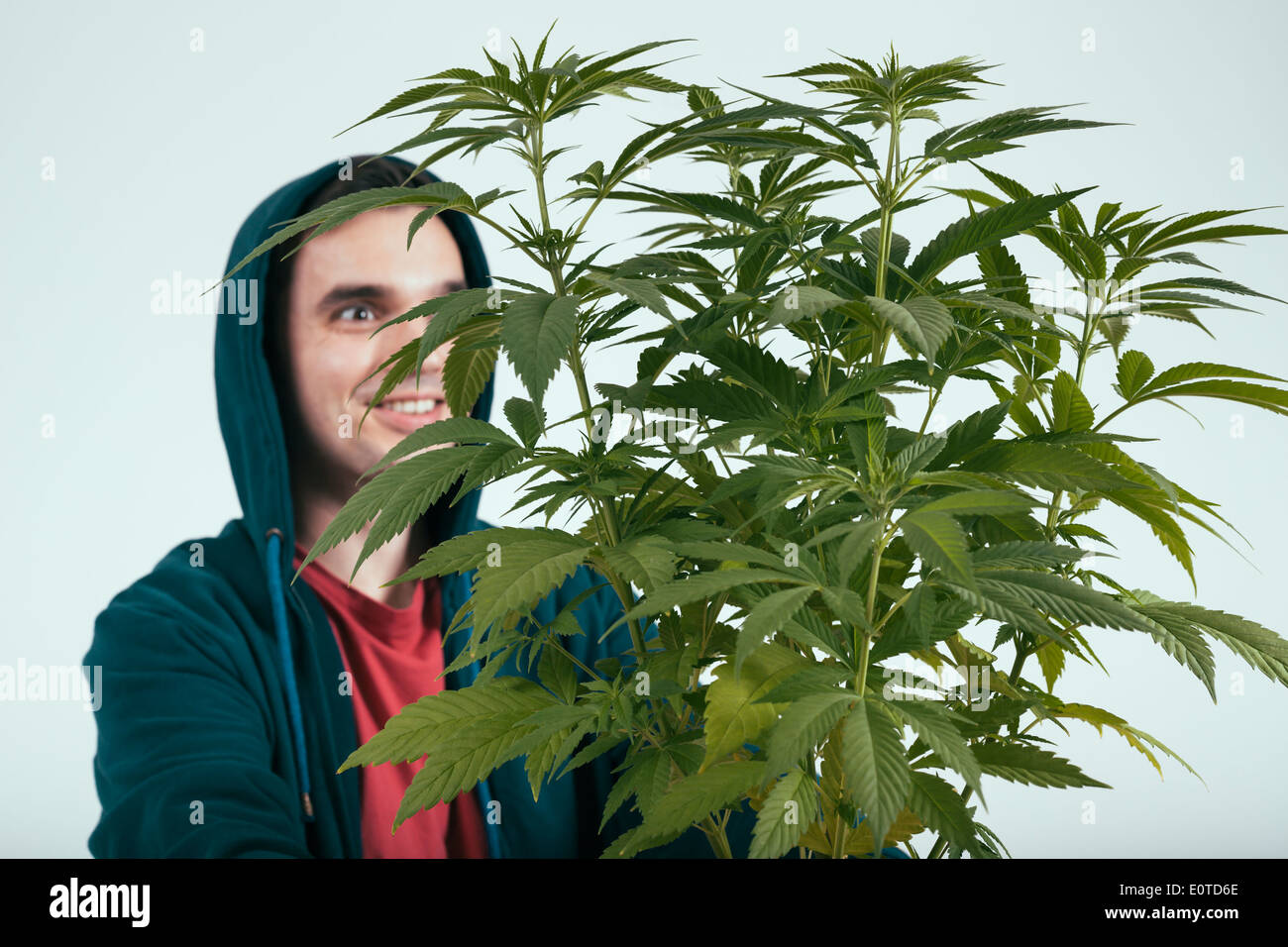 Happy man in hoodie and cannabis plant. - Stock Image