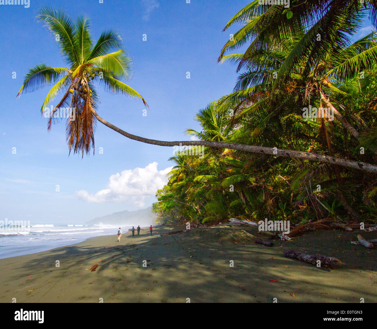 Walking in the Corcovado National Park on the Pacific coast of Costa Rica - Stock Image