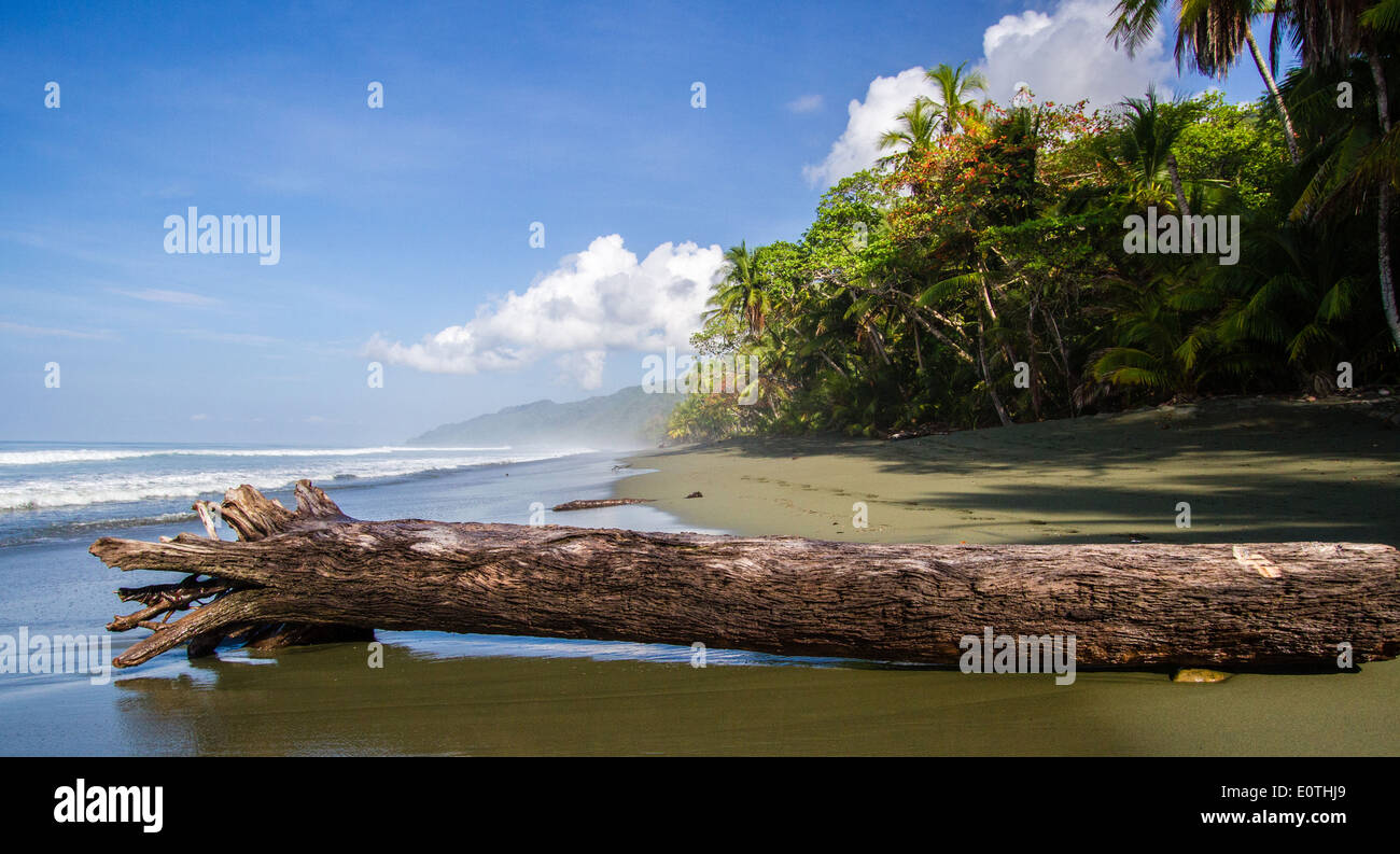 Beach by the maritime rainforest of Corcovado National Park on the Osa Peninsula Costa Rica - Stock Image