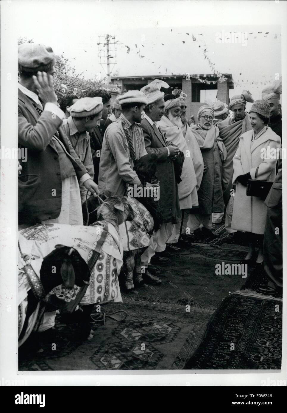 Feb. 02, 1961 - The Royal Tour of Pakistan Queen Looks at Sacrificial sheep. H.M. Queen Elizabeth II looks at four sheep dressed in Gaily printed scarves which were presented to her as the traditional frontier gift at Jamrud in the Tribal area bordering on the Pakistan - Afghanistan frontier. The Queen symbolically accepted the beats by patting each of them on the head. Then they were returned to he ''Maliks'' (Local Chiefs) to be slaughtered and distributed among the people at a Feast 1/2. Seen during the stage visit to Pakistan. - Stock Image