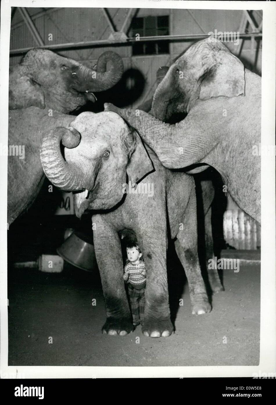 Jul. 07, 1961 - Animal training is in the blood of two years old Yvonne Kruse we daughter of the famous trainer - now working up his act presented by his wife at the Bertran Mills Circus - now in winter querters at Ascot. Almost over since she has been able to sit up - the sight of an elephant has excited Yvonne. The elephants them selves treat her with great respect. Her favorite is Kam - with whom she can do almost anything - Stock Image