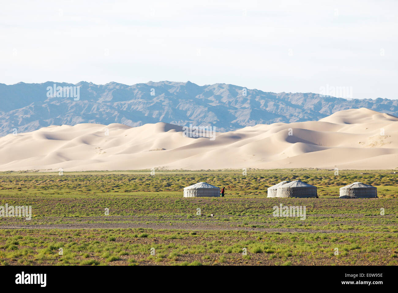 Yurts or Gers, on the green steppe in front of the large sand dunes of Khongoryn Els, Gobi Gurvansaikhan National Park - Stock Image