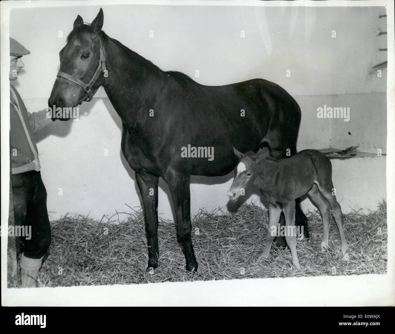 Mar. 26, 1962 - 26-3-62 Foal may be Princess Benedikte's first racehorse sired by Aureole . The famous stallion Aureole owned by H.M. The Queen and which came second in the 1953 having their newborn foal adopted as the futures riding and racehorse of Princess Benedikte of Denmark. On her eighteen birthday the Princess will choose between this foal and another, not yet born to the same famed father and a fine racehorse Asani Nairobi . It is intended that the Princess will have a perfect horse - Stock Image