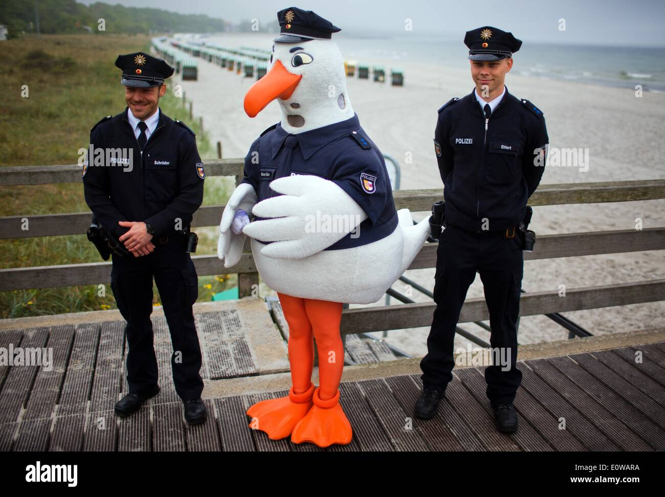 Boltenhagen, Germany. 19th May, 2014. Police seagull 'Klara' stands between police officers Ehlert (R) and Schroeder (L) on the pier on the occasion of the start of the tourist season in Boltenhagen, Germany, 19 May 2014. 80 additional police officers have been detailed, bringing the total number of police officers patrolling the promenades, camping sites and events at the touristic centres in Mecklenburg-Western Pomerania to 200. Photo: Jens Buettner/dpa/Alamy Live News - Stock Image