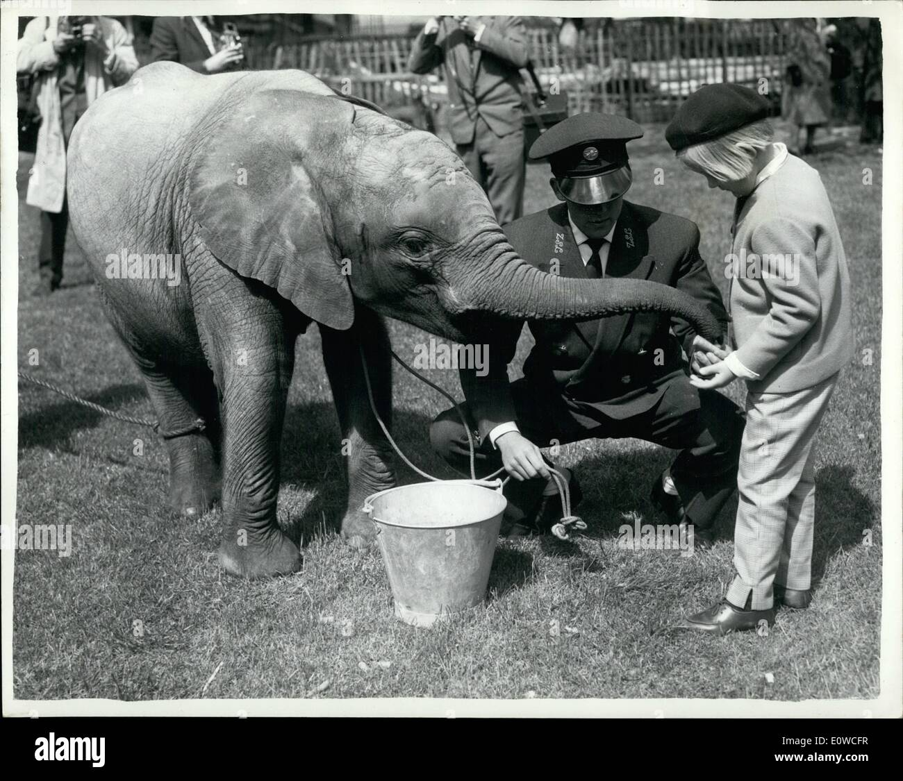 May 05, 1962 - Toto makes her bow... Two year old ''Toto''(it means 'baby') made her bow at the London zoo today. Stock Photo