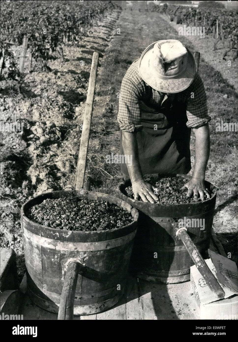 Oct. 27, 1962 - Disastrous harvests were predicted, but because of exceptionally late harvests, all of the predictions - Stock Image