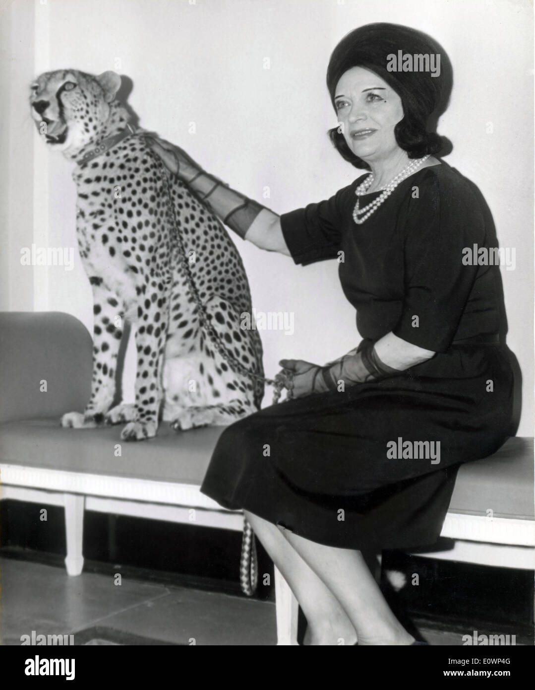 Oct. 25, 1963 - Hollywood, CA, U.S. - Screen vamp POLA NEGRI seen with three year old cheetah Kinna who will appear in the Walt - Stock Image