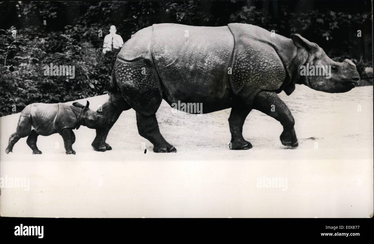 Sep. 09, 1965 - The world's smallest Rhino?; Moola, the mother rhinoceros, proudly struits round Basle Zoo, Switzerland, followed by her baby - born recently at the zoo and the smallest ever born there. Weighing 69 kilos, the baby is thought to be the smallest in the world. It is the sixth rhinoceros to be born at Basle Zoo. - Stock Image