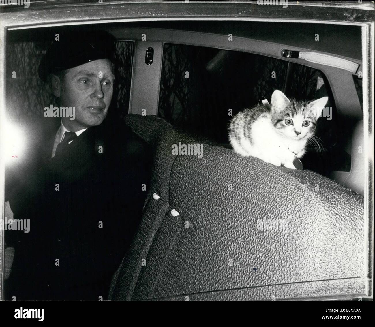 Dec. 12, 1965 - Holly The Kitten Goes To Her New Home By Rolls. Holly the kitten was pushed through the letter box of the letter box of the Canine Defence League's headquarters in London. Around her neck was a 10s. note and a letter asking the league to find her a good home. The league was inundated with offers for her. They decided to give the kitten to Mr. Reginald Kilby and his wife, Patricia, who live at Amersham, Bucks. Holly was taken to her new home by Rolls Royce - Stock Image