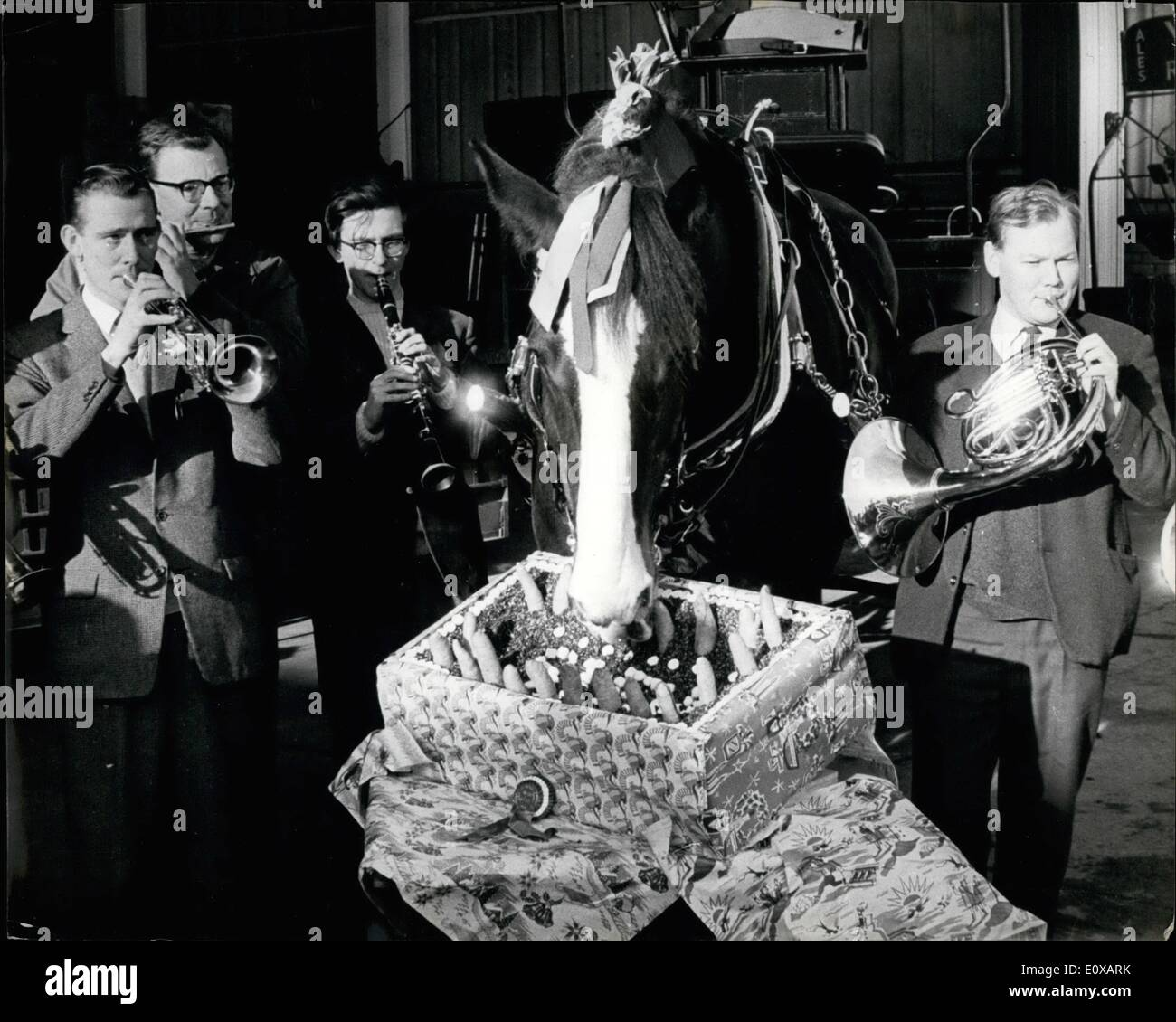 Jan. 01, 1966 - A 21st Birthday Party For ''Steve'' - The Oldest Drayhorse At Young's Brewery: ''Steve'', the oldest Shire horse at Young's Brewery, Wandsworth, celebrated his 21st birthday with a party at the Brewery stables today. The normal working life for a Shire horse is about 7 years, but ''Steve'' has been with Young's for 14 years and still goes out daily delivering beer to nearby pubs. One of ''Steve's'' 21st birthday presents was a box of 21 carrots - Stock Image