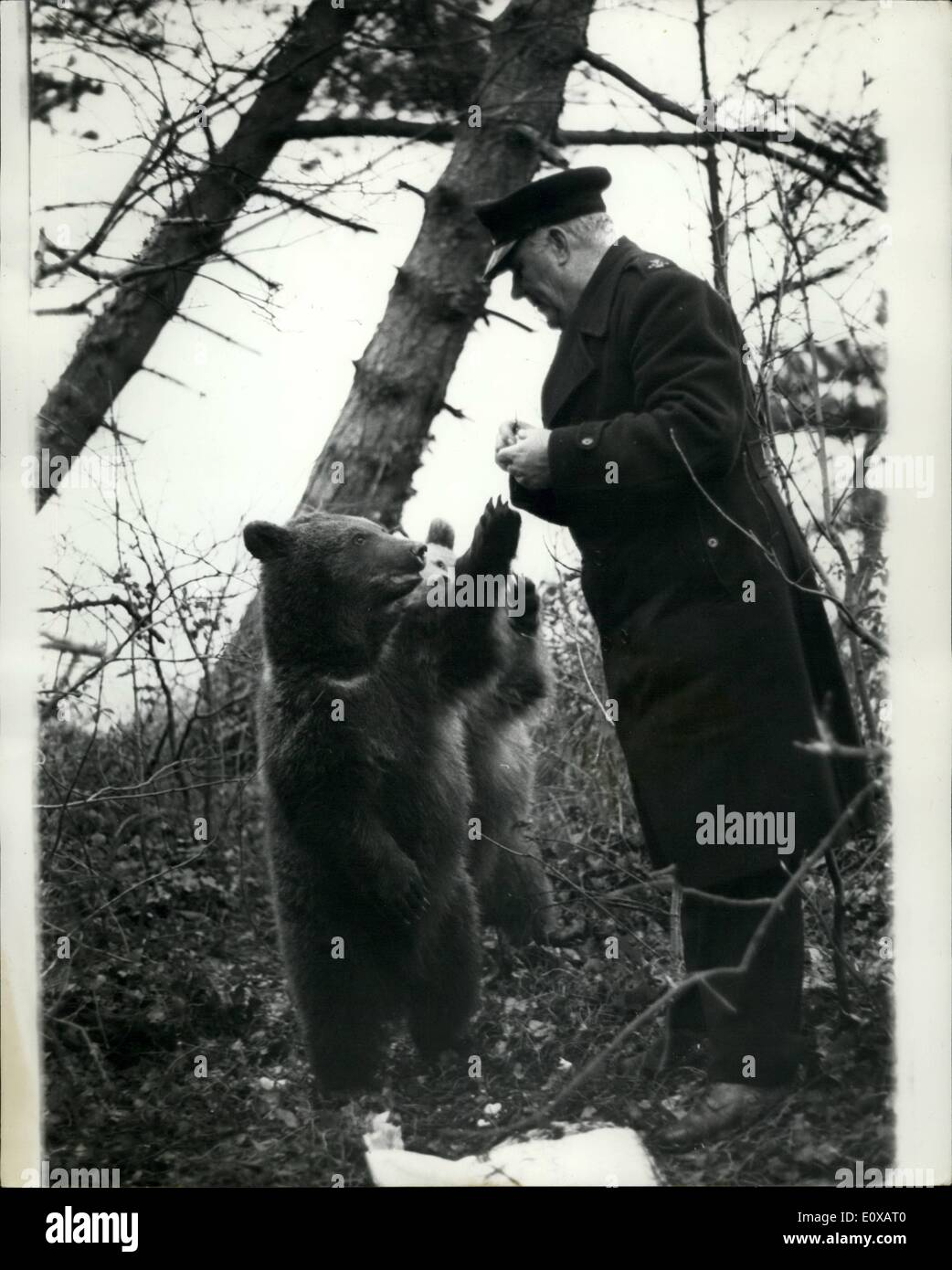 Jan. 01, 1966 - Bears Still at Large on the Isle of Wight. Nikita and Valentina, two Russian bears, have for 12 days evaded capture, after escaping from a children zoo at Ryde, Isle of Wight. So far they have defied the efforts of assorted police, R.S.P.C.A. and zoo men to catch them. Yesterday, Mr. Harold Slater, the island's bear defying R.S.P.C.A - Stock Image
