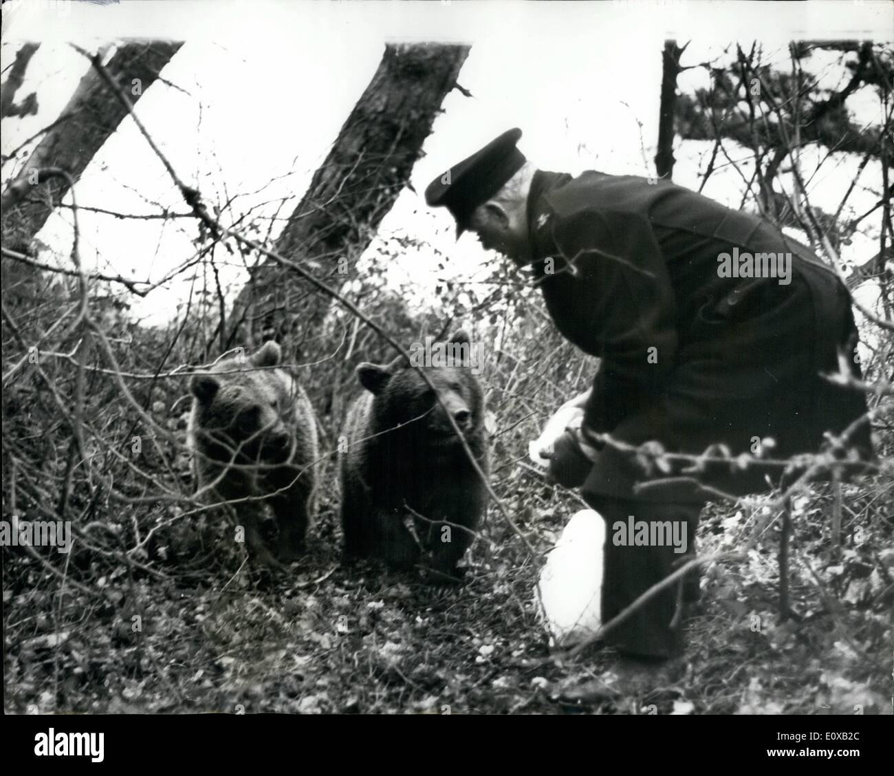Jan. 01, 1966 - Bears still at large on the isle of Wight; Nikita and Valentina, two Russian bears have for 12 days evaded capture, after escaping from a children's zoo at Ryde, Isle of Wight. So far they have defied the efforts of assorted police, R.S.P.C.A. and zoo man to catch them. Yesterday, Mr. Harold Sister, the island's bear defying R.S.P.C.A - Stock Image
