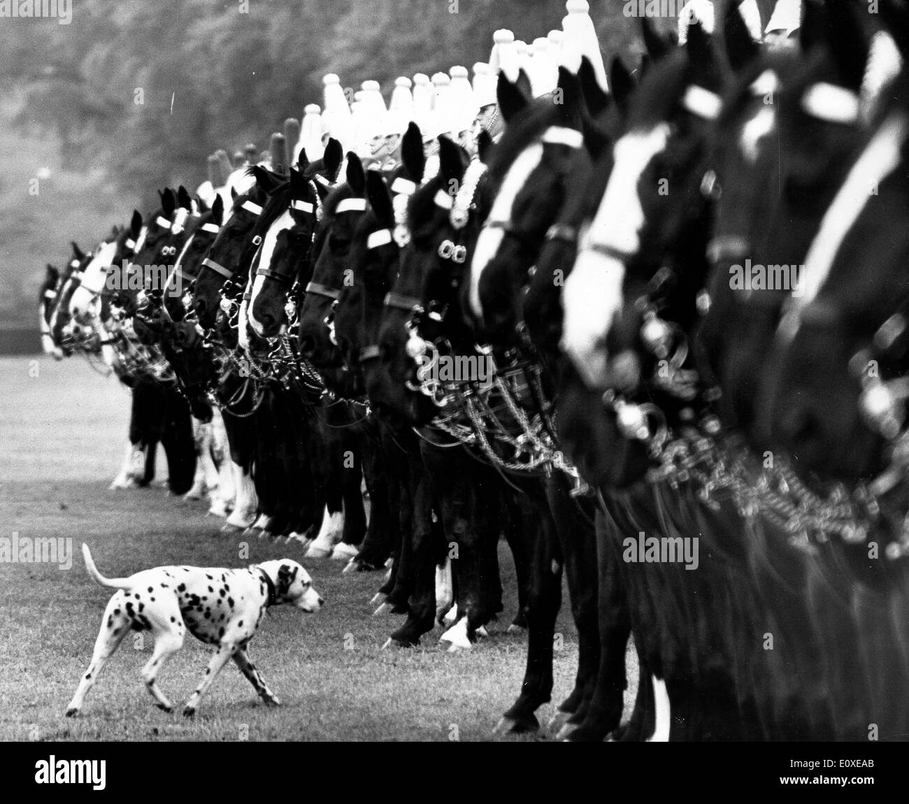 Inspection of Household Cavalry Regiment - Stock Image