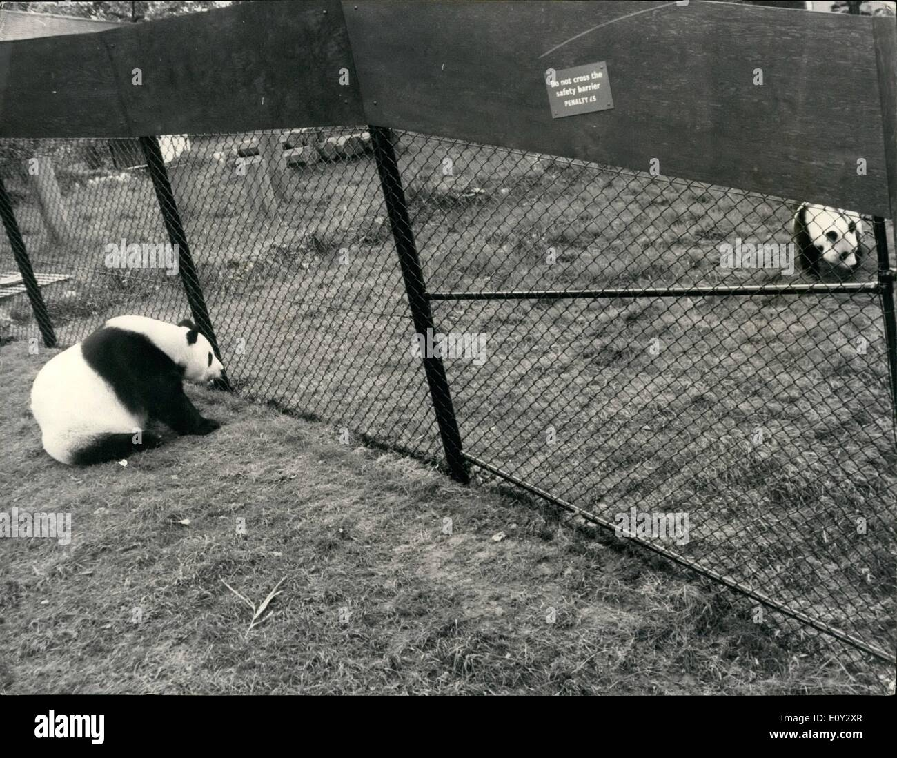 Sep. 09, 1968 - The Continued Courtship of Chi-Chi and An- An: An- An, the Russian giant panda, is at London Zoo - Stock Image