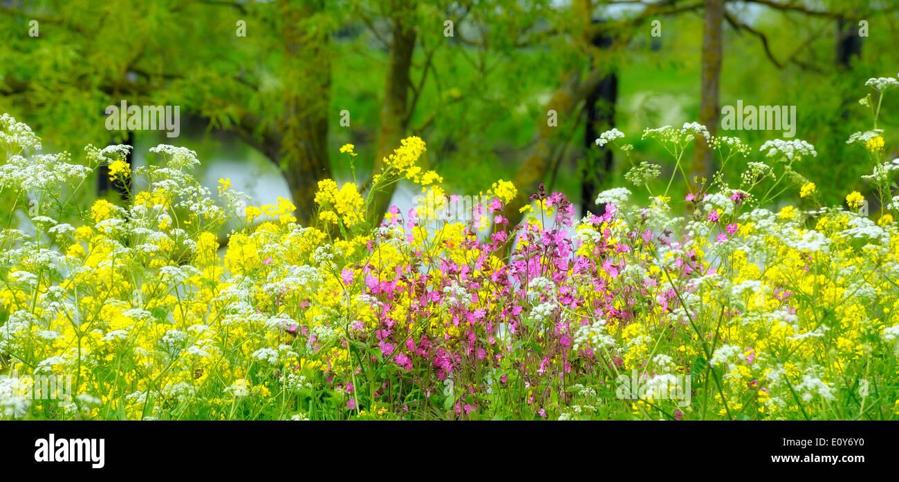 Wild Yellow Flowers In British Stock Photos Wild Yellow Flowers In