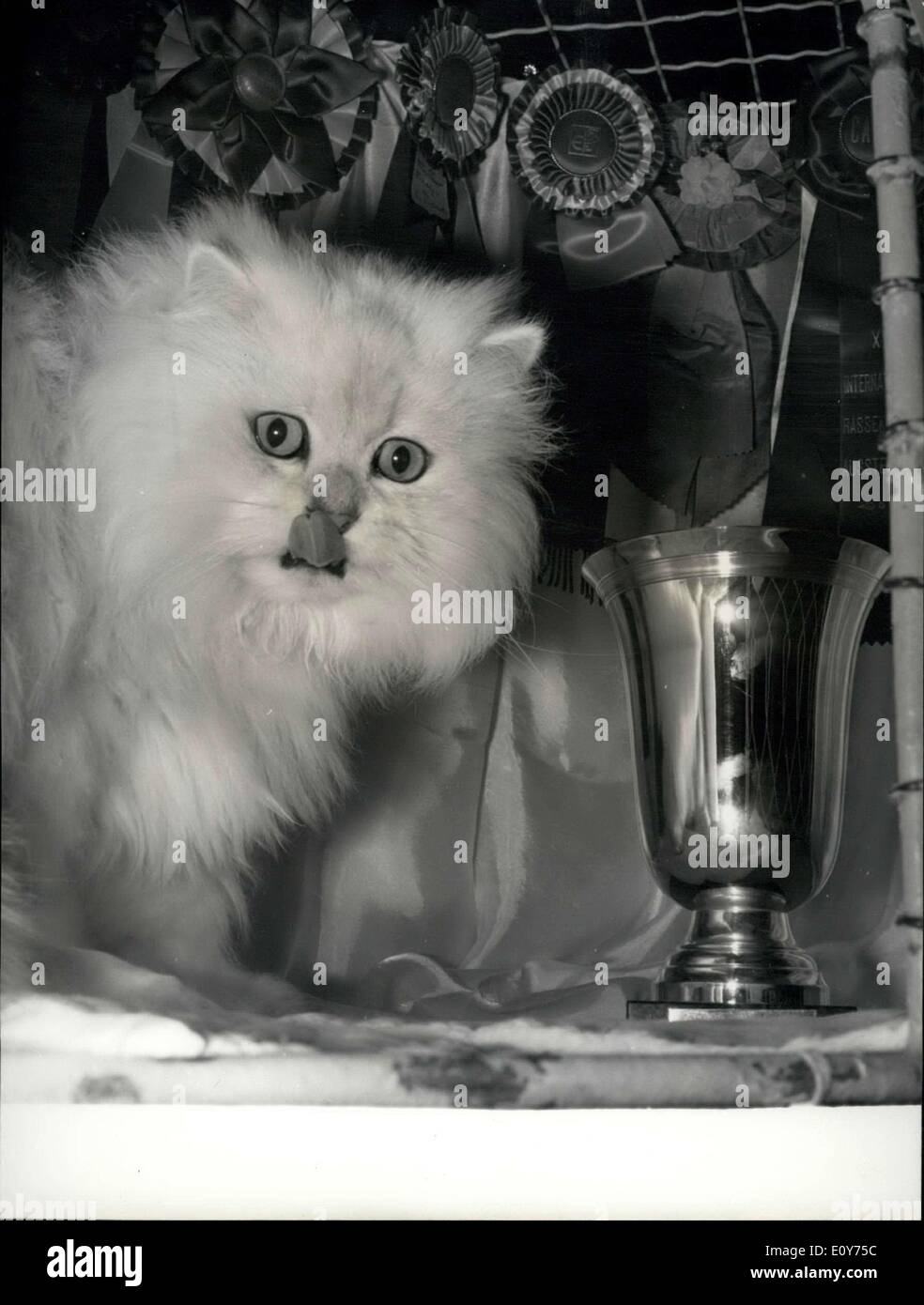 Dec. 23, 1968 - Cat Show: Introducing Champion of Champions: 5-year-old Persian Chinchilla ''Master Thomas'' was proclaimed 'Champion of Champions'' of the 45th World's Cat Show held at the Aero Club, Paris, Yesterday. - Stock Image