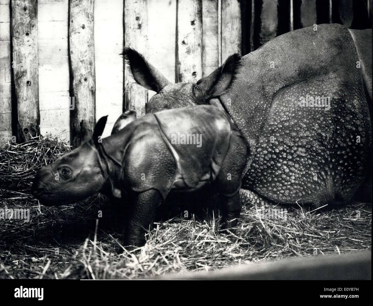 Oct. 10, 1969 - Breeding exploit in the Basic 200:An absolutely extraordinary brooding success in the zoological garden of Basle: The tenth armoured rhinocerorus is born in this swiss captivity. The mother, ''Moola'' was 1'700 kg whon she gave birth to the 76 kg baby on the 5th October.. This world famous breed gives its young rhinrus to the zoo all over the world. Photo shows Mother ''Moola'' with the only a few hours old female baby. - Stock Image