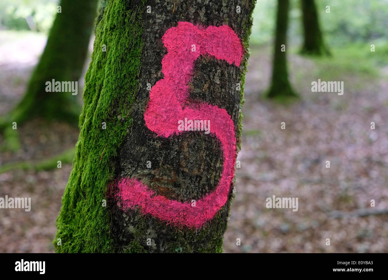 pink number 5 painted on green tree trunk - Stock Image
