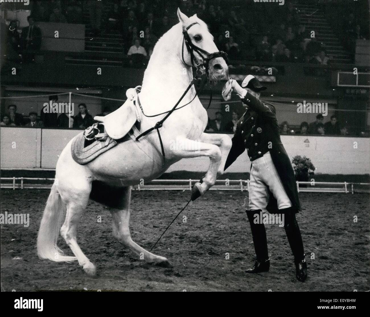 Oct. 10, 1969 - The Spanish riding school of Vienna give display at the Empire pool-Wembley: The Spanish Riding School of Vienna will be giving a complete performance of the Classical Art of Riding as practised at the Imperial Court of Vienna for 400 years, at the Empire Pool, Wembley, next week. Today the Lipizzaner Stallions of the famous school were rehearsing at Wembley for next week's display: Photo shows one of the famous Lipizzaner horses is seen doing the Levade Squatting deep on its hindquarters, the horse lifts his fore feet off the ground and maintains this position for a length of - Stock Image