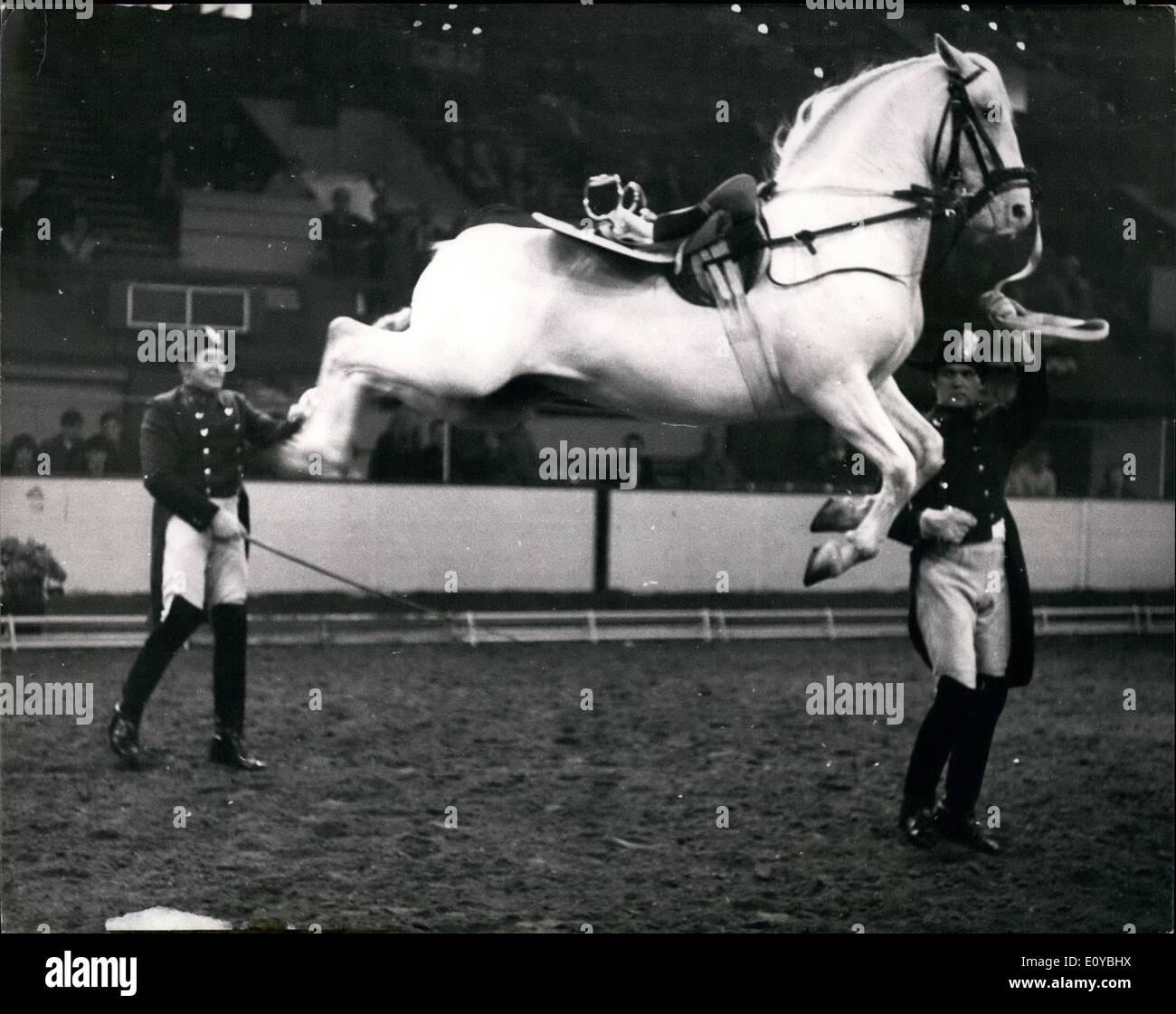Oct. 10, 1969 - The Spanish riding school of Vienna give display at the Empire pool-Wembley: The Spanish Riding School of Vienna will be giving a complete performance of the Classical Art of Riding as practised at the Imperial Court of Vienna for 400 years, at the Empire Pool, Wembley, next week. Today the Lipizzaner Stallions of the famous school were rehearsing at Wembley for next week's display: Photo shows one of the famous Lipizzaner stallions performs the Capriole - in this the horse leaps simultaneously with all four feet and at the height of its leap, with its body horizontal - Stock Image