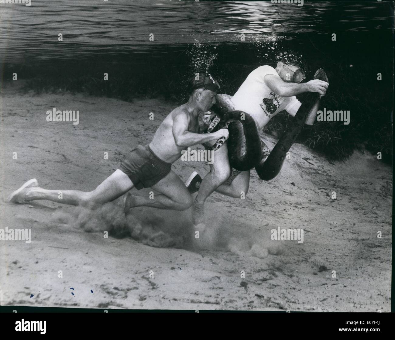 Jan. 1, 1970 - Man Versus Anaconda - Underwater. Most Fantastic Battle Of A Lifetime: Horror registered grimly on the faces of a small group of Spectators as Ross Allen -a 50-year-old American Naturalist - proceeded on the maddest stunt of his life.... wrestling with a killer-Anaconda - underwater. Never before in the history of mankind has such a fantastic challenge take place. Despite a flood of protest plunged into the river and barehanded tackled the gigantic serpent whose muscular power is known for its ability to crush all its victims to death - Stock Image